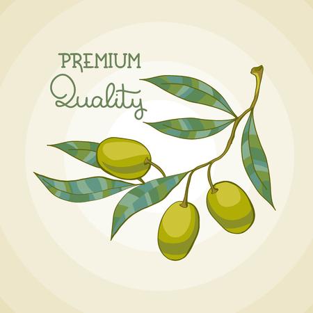 Vector illustration of olive branch. Olive tree. Premium quality oil Ilustracja