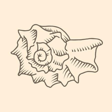 Vector illustration of spiral seashell