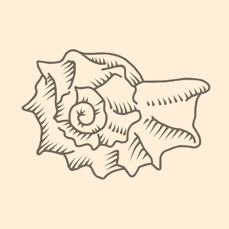 19th century style: Vector illustration of spiral seashell
