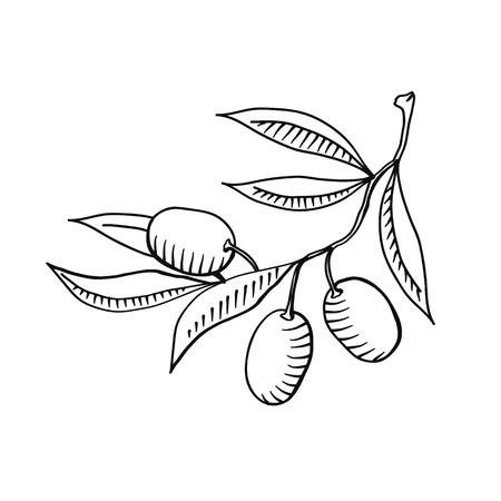Illustration von Olivenzweig isoliert auf dem weißen Hintergrund
