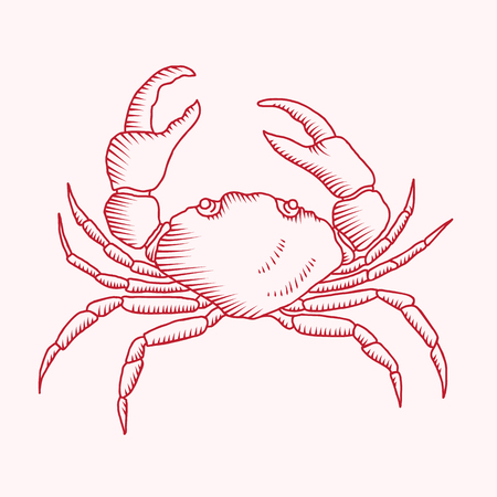 Detailed vector drawing of a red sea crab illustration