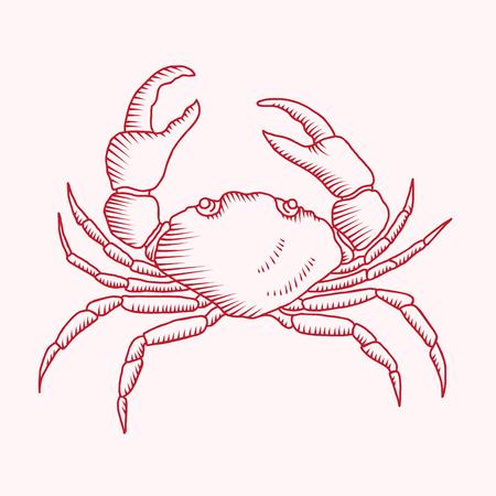 Szczegółowy rysunek wektor ilustracji kraba czerwonego morza