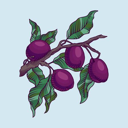 ciruela: ilustración vectorial de la rama de ciruelo con la fruta del ciruelo