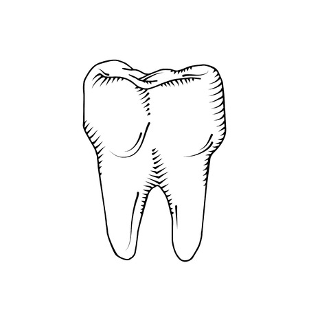 Tooth isolated on white background. Dental, medicine, health concept