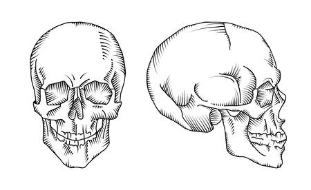 Illustration du crâne anatomique isolé sur le fond blanc. Vecteur. Dessiné à la main.