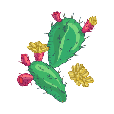 cactus flower: Cactus flower, cactus isolated. Pot Cactus logo. Cactus icon, Vector cactus pot. Cartoon Cactus Illustration. Dessert flora. Green Cactus, dwarf cactus.