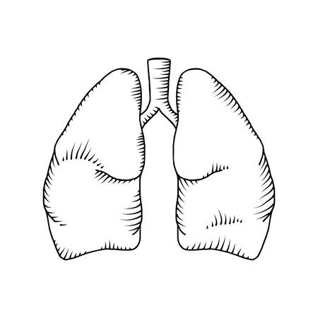 Lung vector detailed illustration. medical background 일러스트