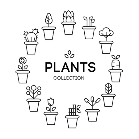 ferns and orchids: icons of pot plants garden. vector illustration
