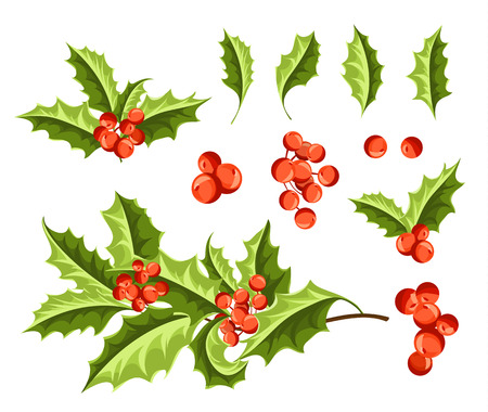 aquifolium: Christmas Holly Berry Set. Vector Illustration