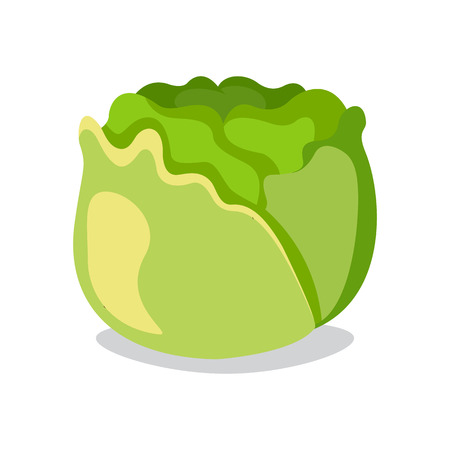 isolated object: Cabbage icon in flat style. Isolated object. Vegetable from the garden. Organic food. Vector illustration.