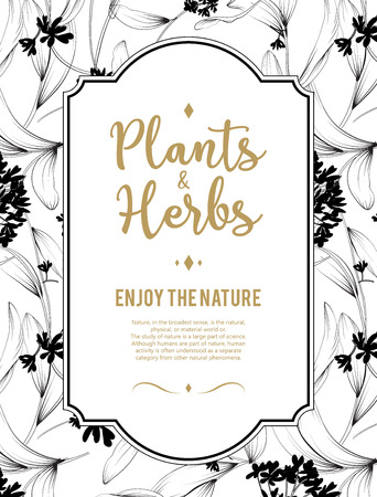 element: Plants and herbs background. Element for design or invitation card Stock Photo