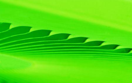抽象的な線や緑の色のグラデーション。