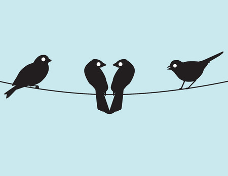 seem: Four birds hanging on an electric line, two of them seem to be in love.