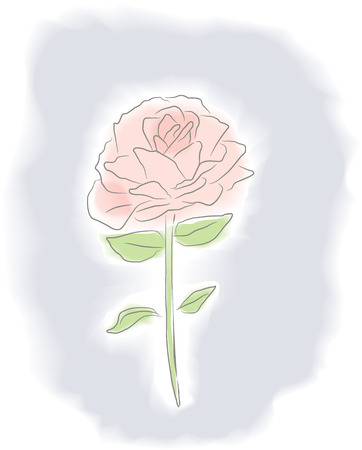 Vector illustration of a single rose in watercolor style. Vector