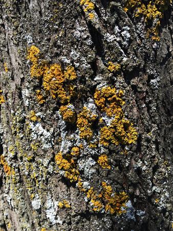 tree bark background Reklamní fotografie - 90193306