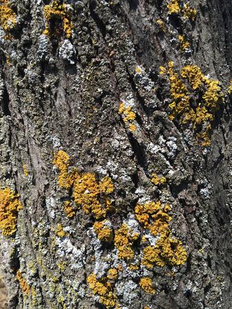 tree bark background Reklamní fotografie - 90193310