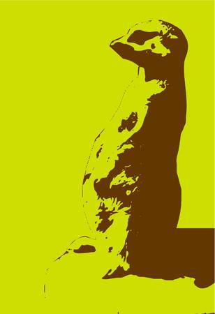 tier: meercat