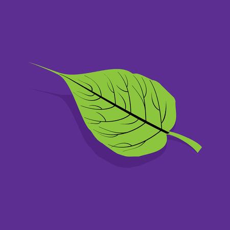 spiritual growth: creative green leaf vector Illustration