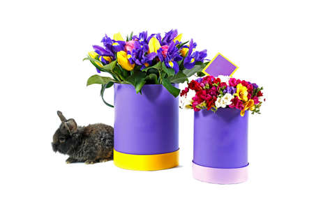 Festive flowers in round multicolored boxes on a white background, with a live rabbit sitting next to it