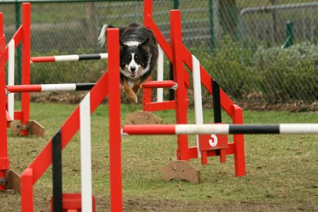 Dog jumping over an obstacle