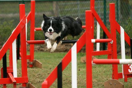 agility: Agility Stock Photo