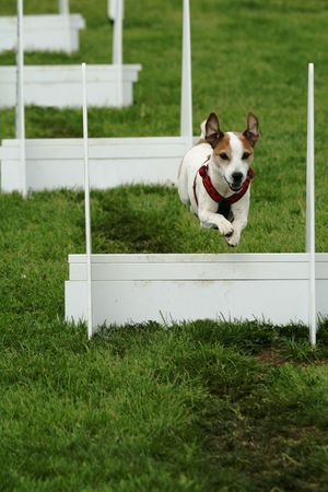Flyball competition Stock Photo