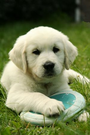 Puppy with disc