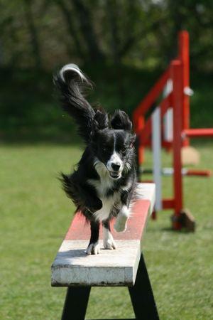 agility: Agility competition Stock Photo
