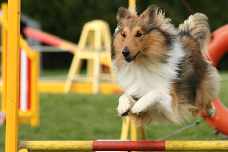 outdoor training: Agility jumping