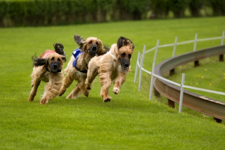 perros corriendo Foto de archivo - 4795794