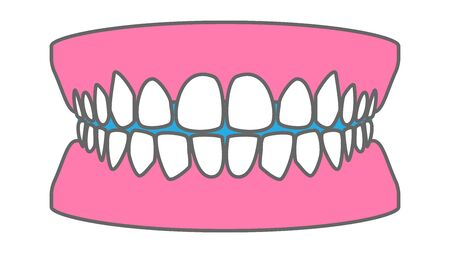 Healthy White Teeth, Tooth Arrangement Real Illustration Vector Material