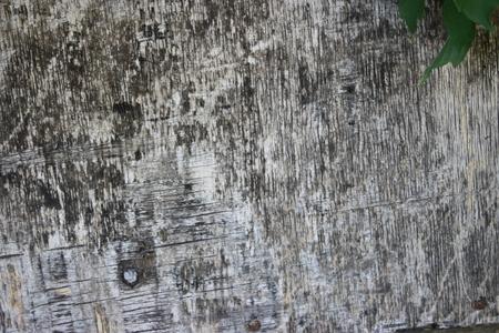 Texture tree bark 版權商用圖片