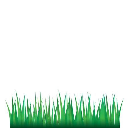 national parks: Green Grass, Isolated On White Background, Vector Illustration