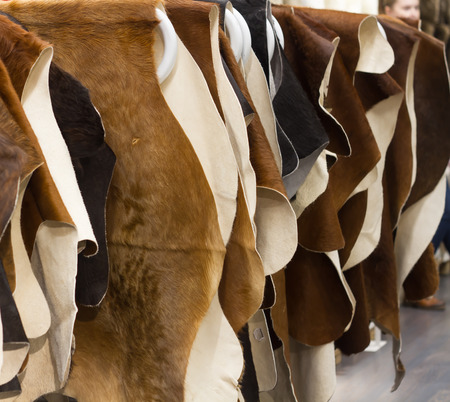 Cattle hides cow, hanging showcase in store different color black and brown. Russia Moscow