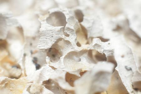 Part of the light tree eaten termites, macro