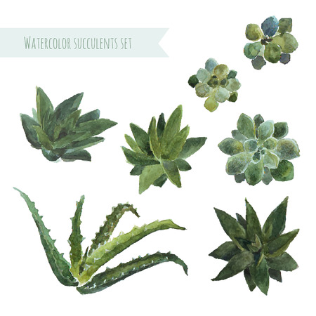 Watercolor set succulent plants. Vector. For printing wedding, invitations, save the date etc. Ilustração