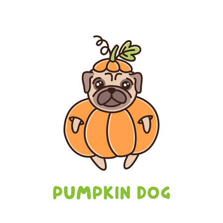 Netter Hund der Pugzucht in einem Kürbiskostüm. Es kann für Aufkleber, Fleck, Telefonkasten, Plakat, T-Shirt, Becher und anderes Design verwendet werden. Zum Erntedankfest oder Halloween