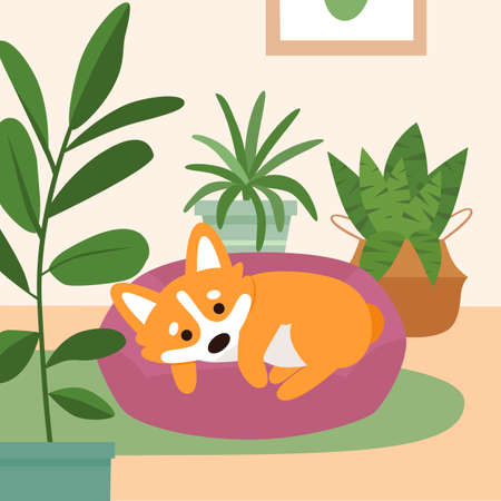 Cute corgi dog sleeping on pillow bed in the living room with home plants. Modern flat vector illustration. Illusztráció