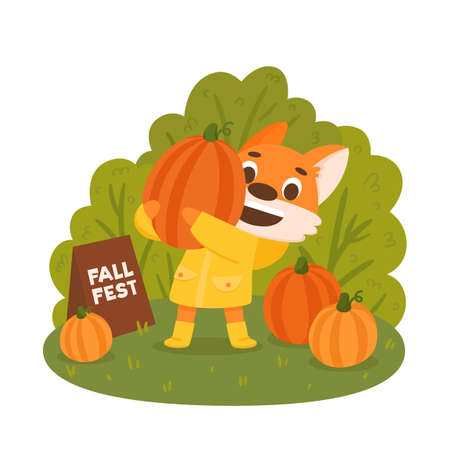 Cartoon fox farmer in yellow raincoat with pumpkins. Autumn harvest festival poster design. Colorful vector illustration.