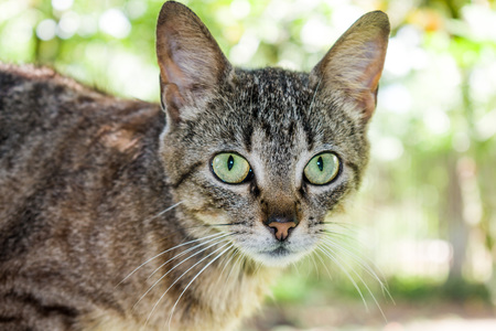 BEAUTIFUL GREEN EYES OF DOMESTIC CAT IN THE FOREGROUND Stock Photo