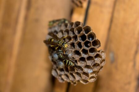 TWO WASPS BUILDING HORNET ON ROOF OF RURAL HOUSE IN FOREGROUND