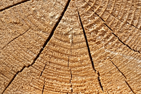 tree felling: tree felling Stock Photo