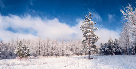 Beautiful winter landscape in a snow wood with a lonely pine tree on a glade photo
