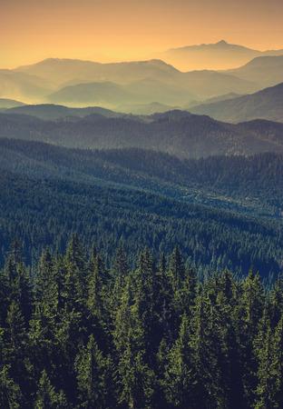 Photo vintage. Vallée de montagne des Carpates avec de nombreuses collines dans un brouillard Banque d'images - 35912830