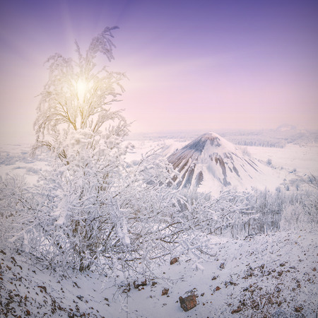 hoar: Snow winter urban landscape with tree in a hoar frost and slagheap on a skyline