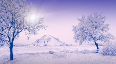 hoar: Snow winter urban landscape with trees in a hoar frost and slagheap on a skyline