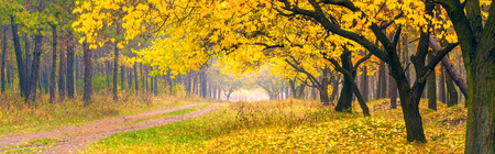 Beautiful yellow trees in a autumn forest 版權商用圖片 - 36178479
