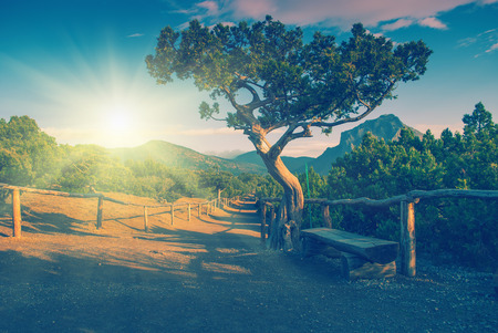 relict: Vintage picture. Relict pine tree at the mountain national park of Crimea Stock Photo