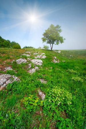 Paysage de printemps avec arbre solitaire dans la vallée de la pierre Banque d'images - 36262285