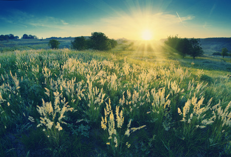 spring landscape: Vintage picture. Magic sunrise in the valley of high grass